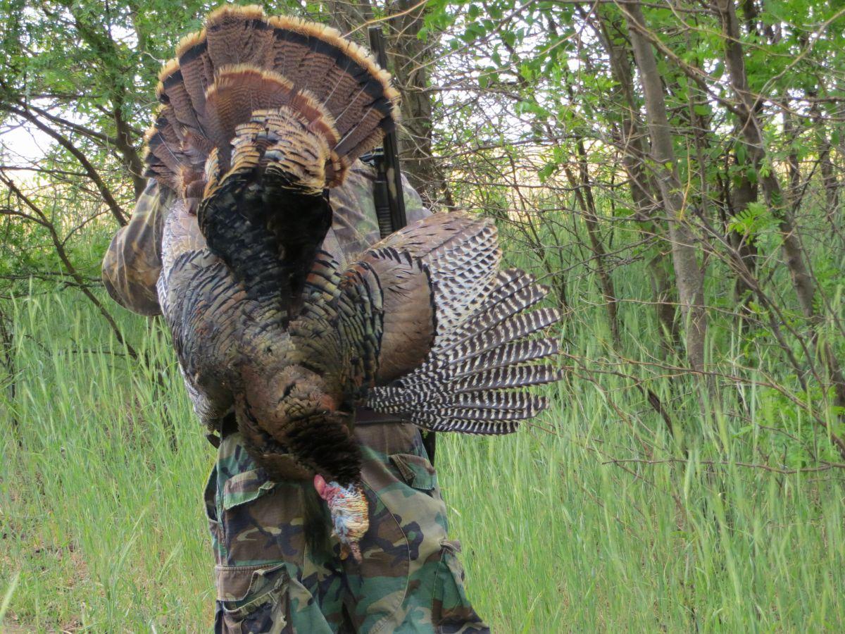 Kansas Turkey Hunting (Rio Grande and Eastern) » Outdoors